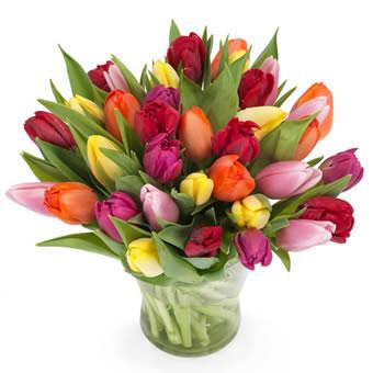 Stort fång med tulpaner i blandade, pigga färger. Ur Euroflorists tulpansortiment.