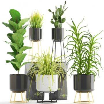 Beställ gröna krukväxter hos Florister i Sverige!
